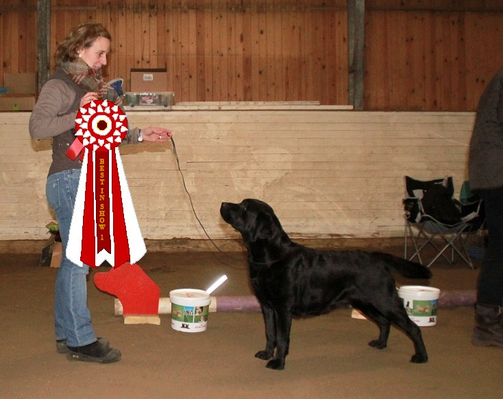 1a Championklass & Best In Show, CH Annuals Tartan Girl